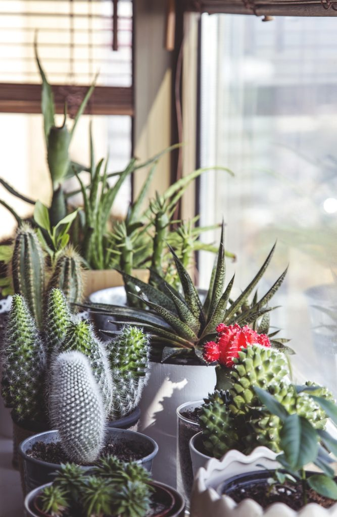 how to take care of your indoor plants, the best houseplants, how to take care of cacti houseplants