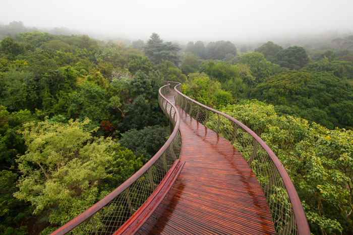 most beautiful object in south africa design indaba, kirstenbosch gardens boomslang