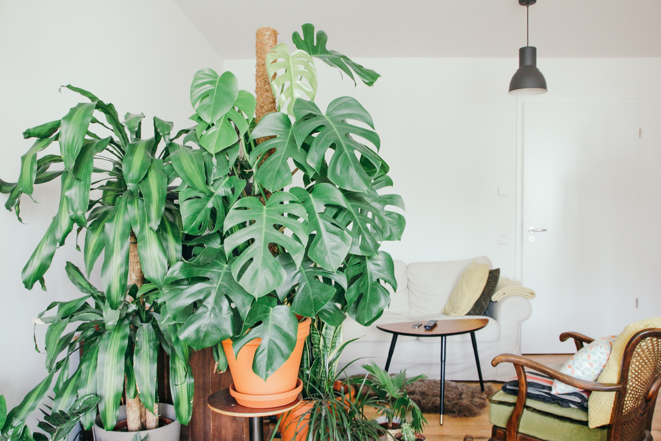 hot to take care of your houseplants