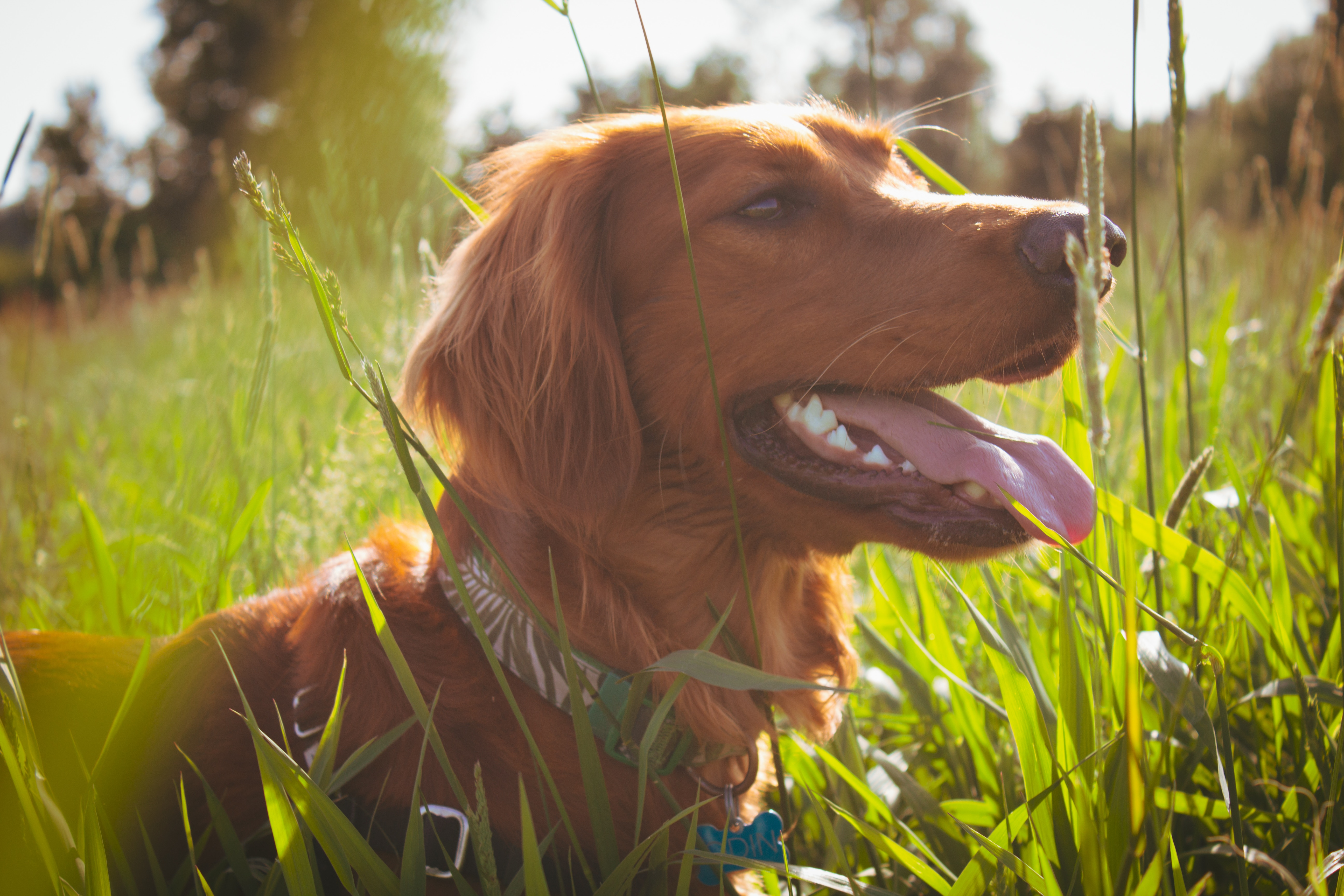 Pet friendly hiking trails in the city